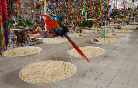 Thinking of Exotic Birds? | Smile for the Birdie - Take Pictures